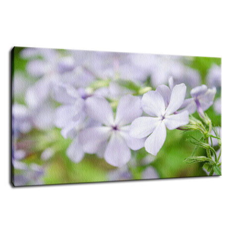 Soft Focus Phlox Carolina Nature / Floral Photo Fine Art Canvas Wall Art Prints
