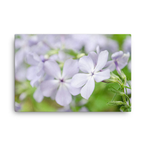 Soft Focus Phlox Carolina Floral Nature Canvas Wall Art Prints