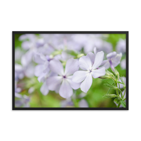 Soft Focus Phlox Carolina Floral Nature Photo Framed Wall Art Print