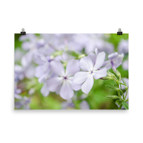 Soft Focus Phlox Carolina Floral Nature Photo Loose Unframed Wall Art Prints