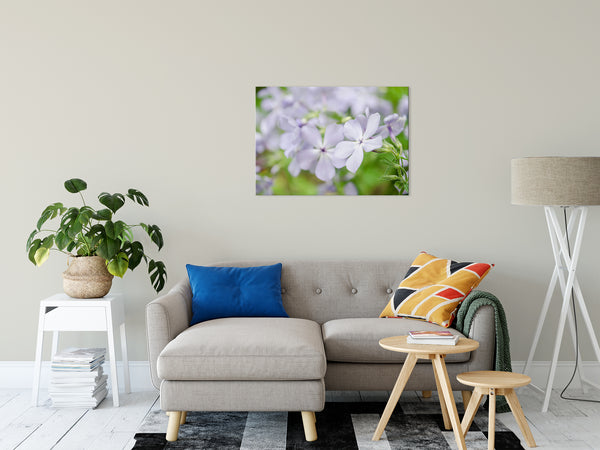 "Soft Focus Phlox Carolina Nature / Floral Photo Fine Art Canvas Wall Art Prints 24"" x 36"" - PIPAFINEART"
