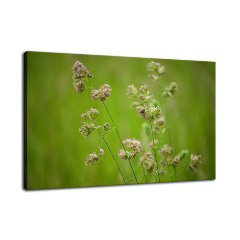 Softened Fields Botanical / Nature Photo Fine Art Canvas Wall Art Prints
