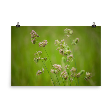 Softened Fields Botanical Nature Photo Loose Unframed Wall Art Prints