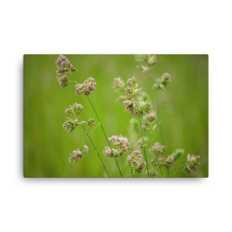 Softened Fields Floral Nature Canvas Wall Art Prints