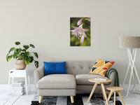 "Softened Hosta Bloom Nature / Floral Photo Fine Art Canvas Wall Art Prints 20"" x 30"" / Fine Art Canvas - PIPAFINEART"