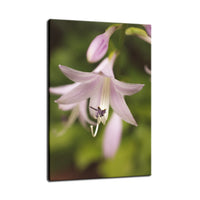 Softened Hosta Bloom Nature / Floral Photo Fine Art Canvas Wall Art Prints  - PIPAFINEART