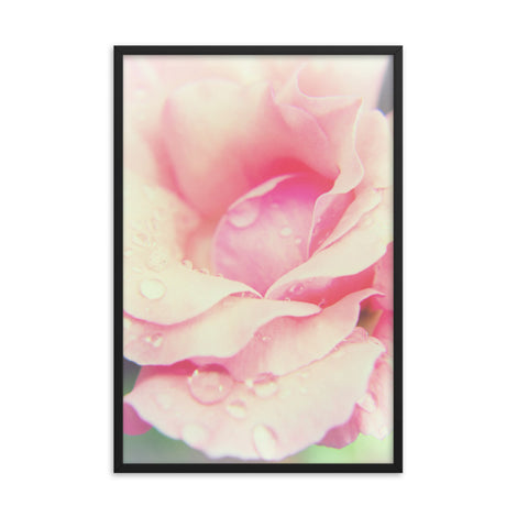 Softened Rose Floral Nature Photo Framed Wall Art Print