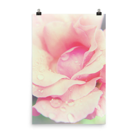 Softened Rose Floral Nature Photo Loose Unframed Wall Art Prints