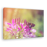 Spider Flower in Glory Light With Spotted Moth Nature Photography Wall Art Prints Unframed and Fine Art Canvas Prints - PIPAFINEART