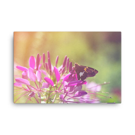 Spider Flower in Glory Light With Spotted Moth Floral Nature Canvas Wall Art Prints