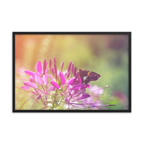 Spider Flower in Glory Light With Spotted Moth Floral Nature Photo Framed Wall Art Print