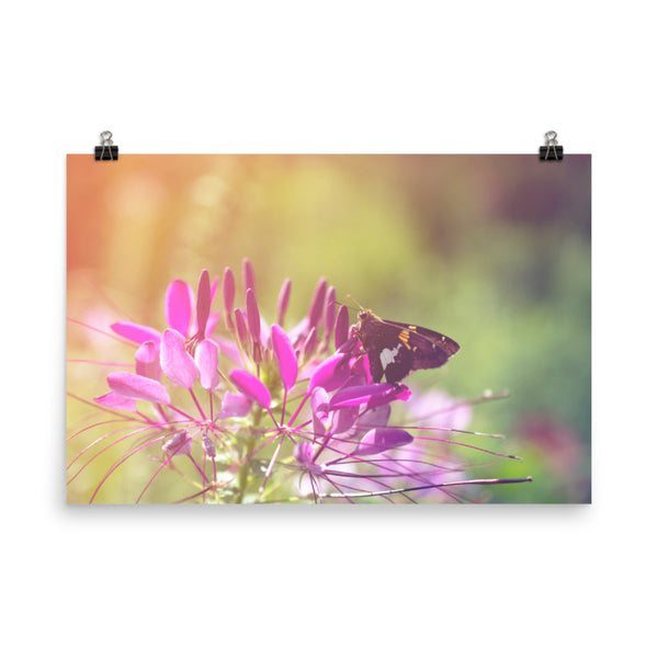 Spider Flower in Glory Light With Spotted Moth Floral Nature Photo Loose Unframed Wall Art Prints  - PIPAFINEART