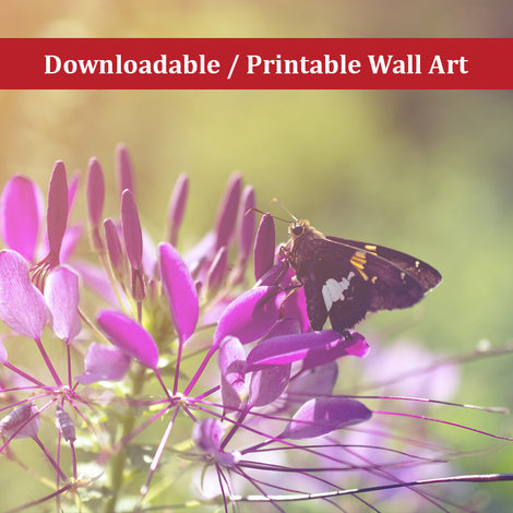 Spider Flower in Glory Light With Spotted Moth Nature Photo DIY Wall Decor Instant Download Print - Printable