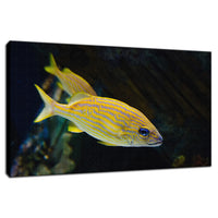 Spotted Fish Animal / Wildlife Photograph Fine Art Canvas & Unframed Wall Art Prints  - PIPAFINEART