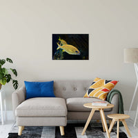 "Spotted Fish Animal / Wildlife Photograph Fine Art Canvas & Unframed Wall Art Prints 20"" x 30"" / Canvas Fine Art - PIPAFINEART"