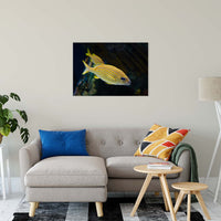 "Spotted Fish Animal / Wildlife Photograph Fine Art Canvas & Unframed Wall Art Prints 24"" x 36"" / Canvas Fine Art - PIPAFINEART"