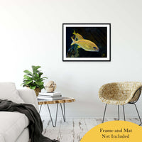 "Spotted Fish Animal / Wildlife Photograph Fine Art Canvas & Unframed Wall Art Prints 24"" x 36"" / Classic Paper - Unframed - PIPAFINEART"