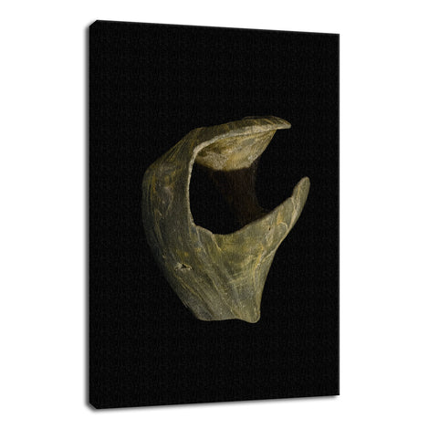 States of Erosion Image 5 Whelk Shell Coastal Nature Photo Fine Art Canvas Wall Art Prints