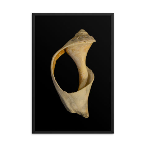 States of Erosion Image 2 Whelk Shell Coastal Nature Photo Framed Wall Art Print