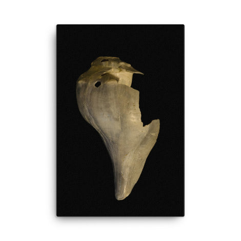 States of Erosion Image 7 Whelk Shell Coastal Nature Canvas Wall Art Prints