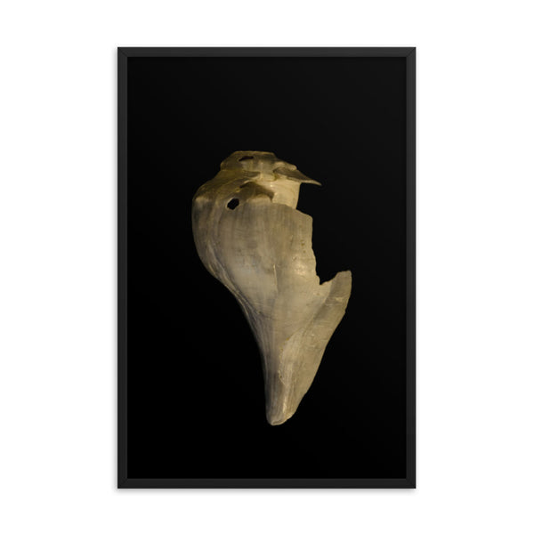 States of Erosion Image 7 Whelk Shell Coastal Nature Photo Framed Wall Art Print  - PIPAFINEART