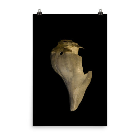 States of Erosion Image 7 Whelk Shell Coastal Nature Photo Loose Unframed Wall Art Prints