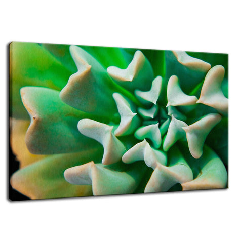 Succulent Botanical / Nature Photo Fine Art Canvas Wall Art Prints