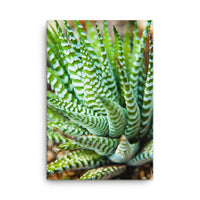 Succulent 2 Botanical Nature Canvas Wall Art Prints  - PIPAFINEART
