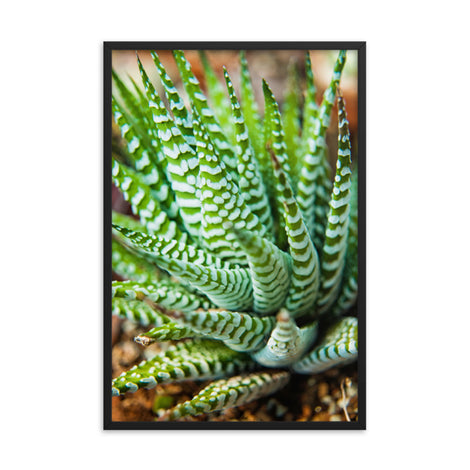 Succulent 2 Botanical Nature Photo Framed Wall Art Print