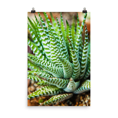 Succulent 2 Botanical Nature Photo Loose Unframed Wall Art Prints