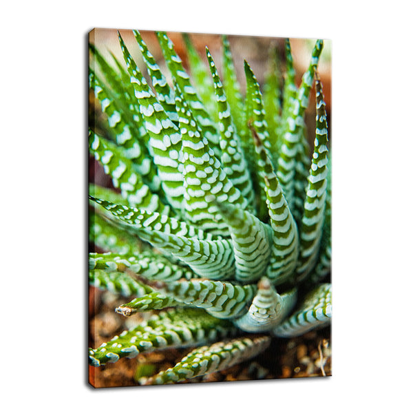 Succulent 2 Botanical / Nature Photo Fine Art Canvas & Unframed Wall Art Prints - PIPAFINEART