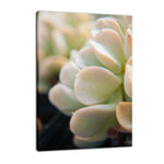 Succulent 4 Botanical / Nature Photo Fine Art Canvas & Unframed Wall Art Prints - PIPAFINEART