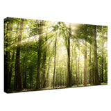 Sun Rays Through Treetops in the Forest Fine Art Canvas Wall Art Prints  - PIPAFINEART
