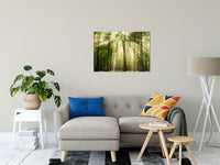"Sun Rays Through Treetops in the Forest Fine Art Canvas Wall Art Prints 24"" x 36"" / Canvas Fine Art - PIPAFINEART"