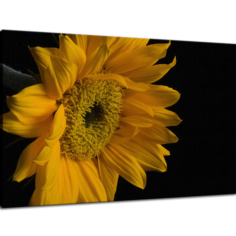 Sunflower from Left Nature / Floral Photo Fine Art Canvas Wall Art Prints