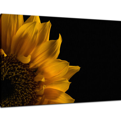 Sunflower in Corner Nature / Floral Photo Fine Art Canvas Wall Art Prints