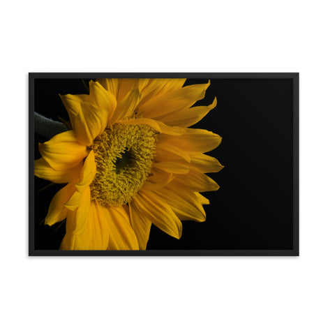 Sunflower from Left Floral Nature Photo Framed Wall Art Print