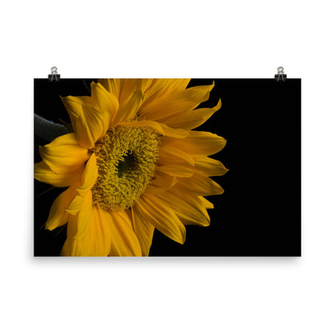 Sunflower from Left Floral Nature Photo Loose Unframed Wall Art Prints