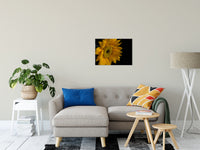 "Sunflower from Left Nature / Floral Photo Fine Art Canvas Wall Art Prints 20"" x 24"" / Fine Art Canvas - PIPAFINEART"