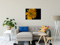 "Sunflower from Left Nature / Floral Photo Fine Art Canvas Wall Art Prints 24"" x 36"" / Fine Art Canvas - PIPAFINEART"