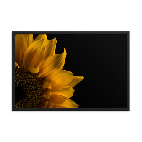 Sunflower in Corner Floral Nature Photo Framed Wall Art Print