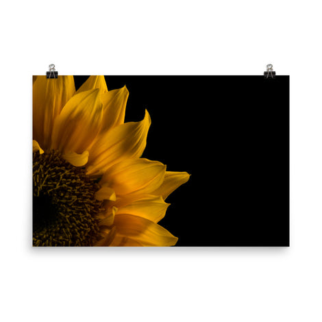 Sunflower in Corner Floral Nature Photo Loose Unframed Wall Art Prints