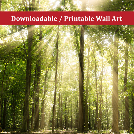 Sun Rays Through Tree Tops Landscape Photo DIY Wall Decor Instant Download Print - Printable