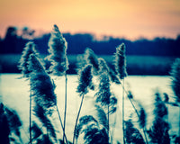 Sunset on the Marsh with Grasses Movement Fine Art Canvas & Unframed Wall Art Prints - PIPAFINEART