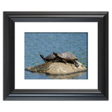 Sunshine Rock with Turtles Animal / Wildlife Photograph Fine Art Canvas & Unframed Wall Art Prints - PIPAFINEART