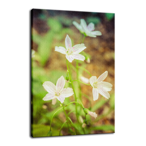 Tranquil Carolina Spring Beauty Nature / Floral Photo Fine Art Canvas Wall Art Prints