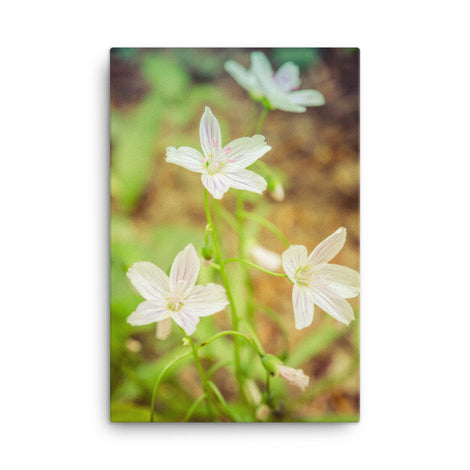 Tranquil Carolina Spring Beauty Floral Nature Canvas Wall Art Prints