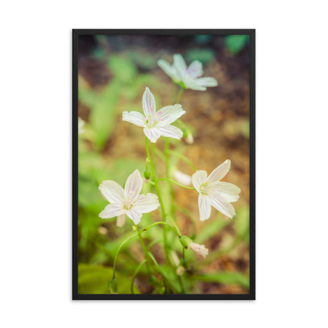 Tranquil Carolina Spring Beauty Floral Nature Photo Framed Wall Art Print