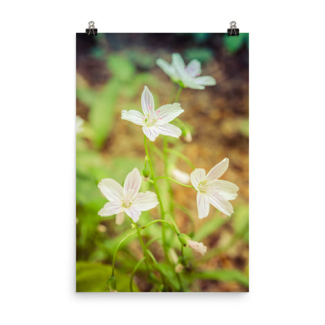 Tranquil Carolina Spring Beauty Floral Nature Photo Loose Unframed Wall Art Prints
