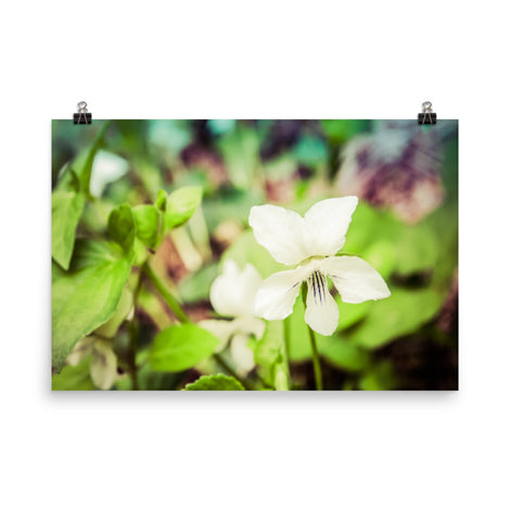 Tranquil China Violet Floral Nature Photo Loose Unframed Wall Art Prints